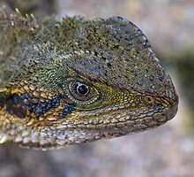 Eastern Water Dragon III by NickVerburgt