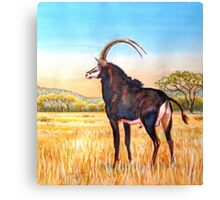 Sable Bull in the Bushveld, South Africa Canvas Print