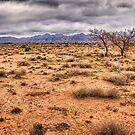 Flinders Ranges pastoral land by Chris Brunton