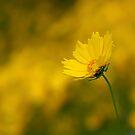 Yellow by Jim Cumming