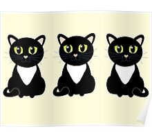 Three Black and White Cats Poster
