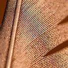 iPAD CASE The golden feather by Darren Bailey LRPS
