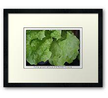 Home Grown Lettuce á lá Nordic Cuisine Including Ant Framed Print