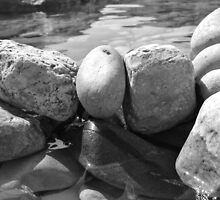 Black and White Watered Rock by AmorphousArt
