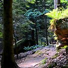Cuyahoga Valley National Park, The Ledges 2 by Debbie  Maglothin