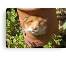 Hamster head Canvas Print