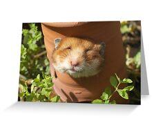 Hamster head Greeting Card