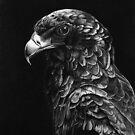 Bateluer Eagle in Ballpoint Pen by Ron  Monroe