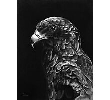 Bateluer Eagle in Ballpoint Pen Photographic Print