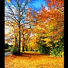 iPAD CASE Forever Autumn by Darren Bailey LRPS