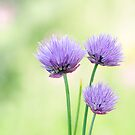Chive by Lifeware