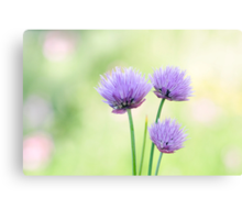 Chive Canvas Print