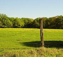 Fence Post by WildestArt