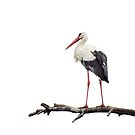 Stork by Lifeware