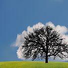 Cloud by Lifeware