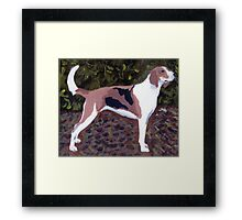 American Foxhound Dog Framed Print