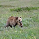 Grizzly by Luann wilslef