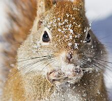 Harsh winter by MIRCEA COSTINA