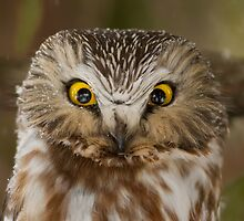 Angry bird by MIRCEA COSTINA