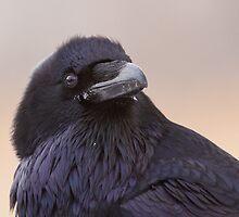 Raven attitude by MIRCEA COSTINA