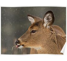 Winter Deer Portrait Poster