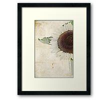Sunny Albino Sunflower Framed Print