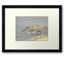 Cat, Lions and Tigers? Framed Print
