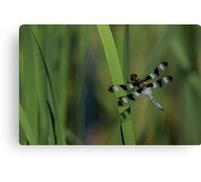 Pond Jewel - Black and White Dragonfly Canvas Print