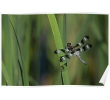 Pond Jewel - Black and White Dragonfly Poster