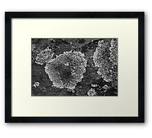 Lichen in Black & White Framed Print