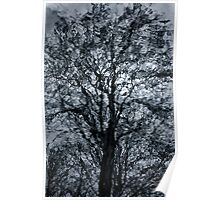 A Tree In A Dream Poster