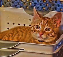 Kitty in a box by vigor