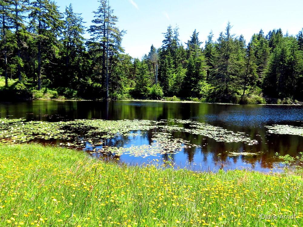 Serenity X's 100...Outside Waldport, Oregon by Diane Arndt