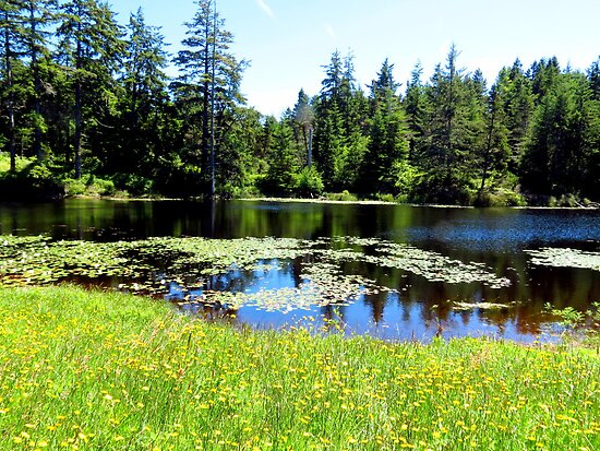 Serenity X's 100...Outside Waldport, Oregon by trueblvr