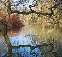 Ye Olde Tree by Nilson Bazana