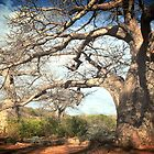 Sun soaked Baobabs by Gigi Guimbeau