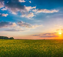 Wheat Field At Sunset by GrishkaBruev