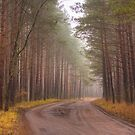 Landscape with a forest road by GrishkaBruev
