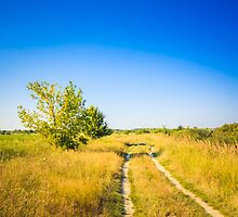 Dirty Rural Road In Countryside by GrishkaBruev