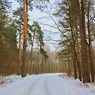 Landscape with a winter forest road by GrishkaBruev