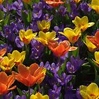 Orange, yellow and purple by Morag Anderson