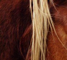 Diary Entry: Quarter Horse  Sticker