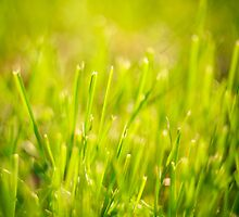 Fresh Spring Green Grass by GrishkaBruev
