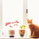 Red Cat Sitting On The Window by GrishkaBruev