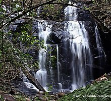 Stevensons falls, The Otways by daisy-lee