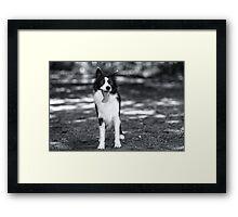 In black & white Framed Print