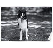 In black & white Poster