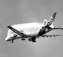 Beluga Transport Plane in B&W by AnnDixon