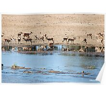 TRANQUILITY AND PEACE IN THE KRUGER NATIONAL PARK SOUTH AFRICA Poster