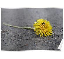 Roadkill Dandelion Poster